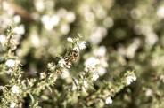 Biene im Bio-Hof in Urnäsch