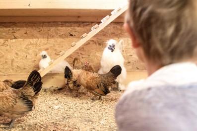 Hühner im Reka Feriendorf Urnäsch