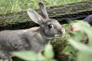 kaninchen in Urnäsch
