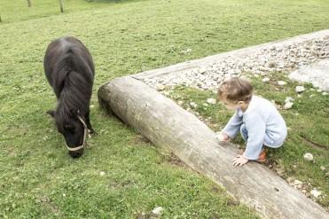 Pony udn Kind im Reka Feriendorf Urnäsch