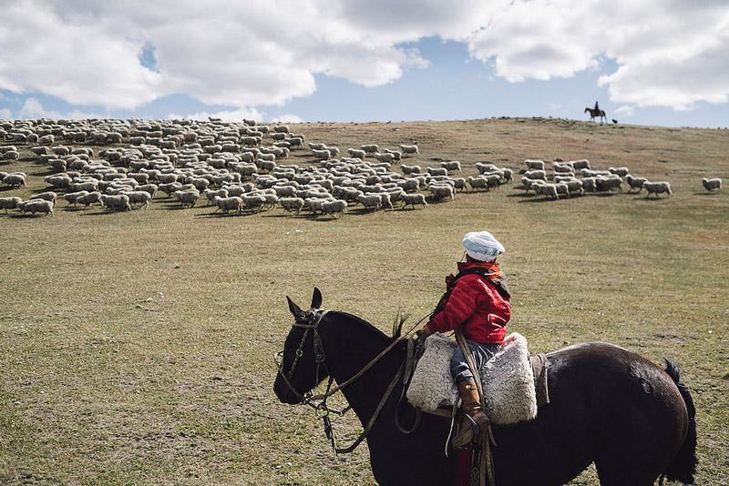 schafe-wolle-gots-patagonien-armedangels-weite
