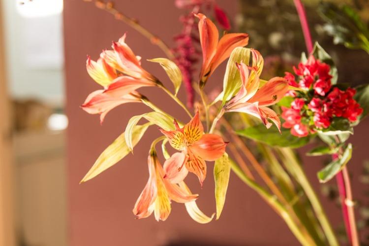 freesie-bloomon-